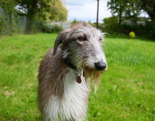Claude Greengrass Dog Breed