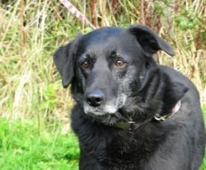 http://www.adoptapet.ie/dogs/hollie/